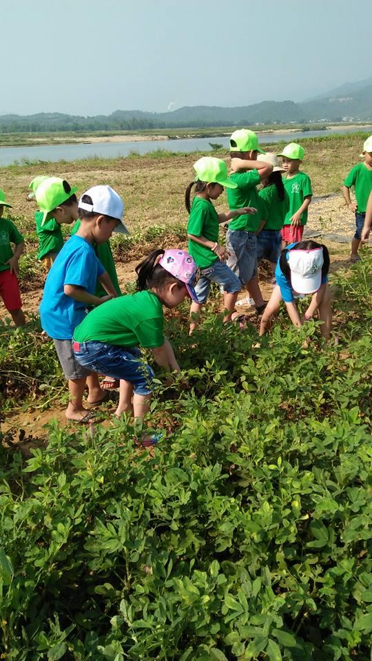 Hoạt động ngoại khóa của các bé lớp lớn 1: Tham quan Chùa Cổ Lâm; Thăm đám đậu phộng